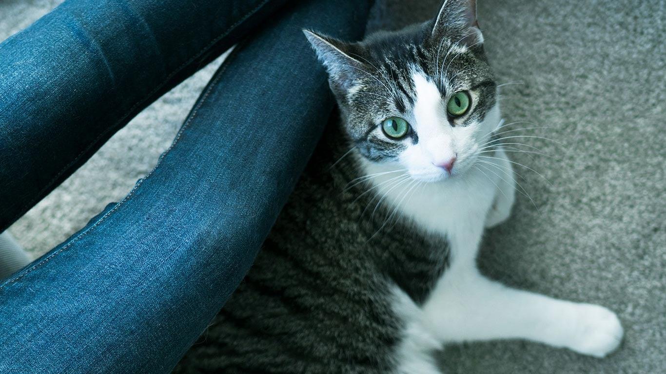 024402b468d0 Ανακαλύψτε μερικούς βασικούς τρόπους για να φροντίσετε κατάλληλα τη γάτα  σας. Διερευνήστε τη βιβλιοθήκη με άρθρα ώστε να μάθετε περισσότερα.