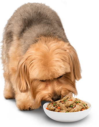 dog eating stew from bowl